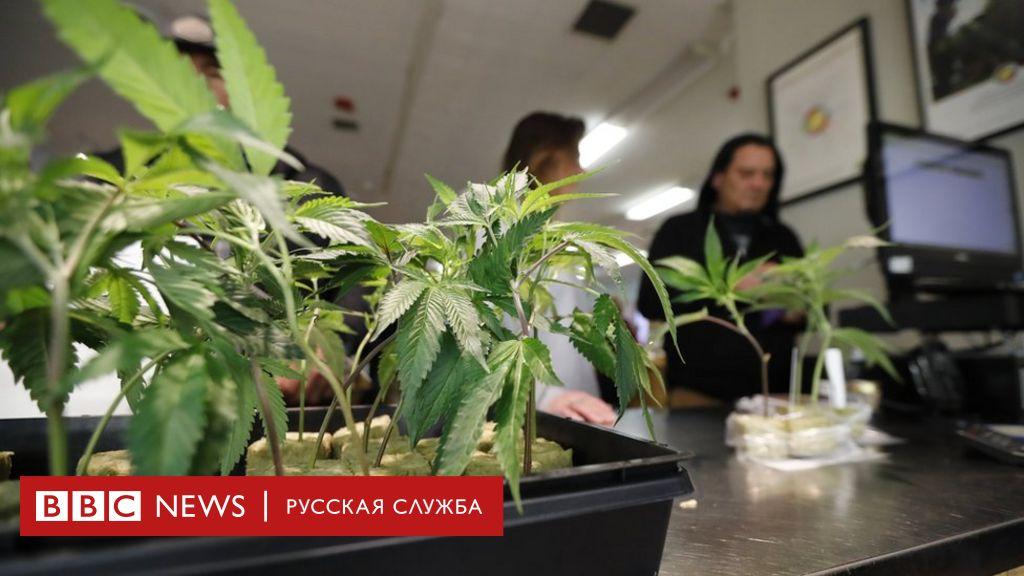 Скачать bbc марихуана сад конопли фото
