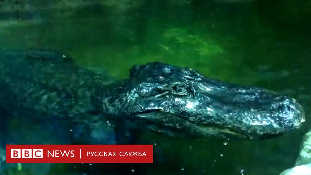 """112426993 image - В Московском зоопарке умер """"аллигатор Гитлера"""". Он пережил взятие Берлина"""