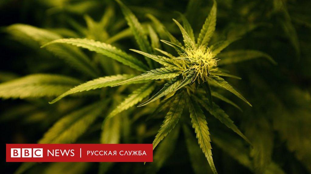 Употребление марихуаны срок значок за коноплю