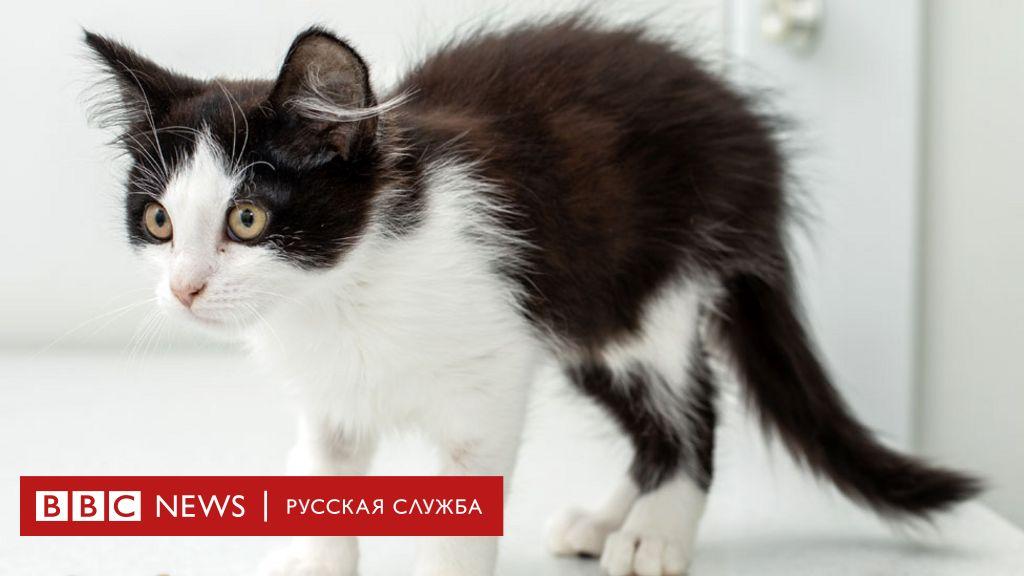 беременная кошка и коронавирус