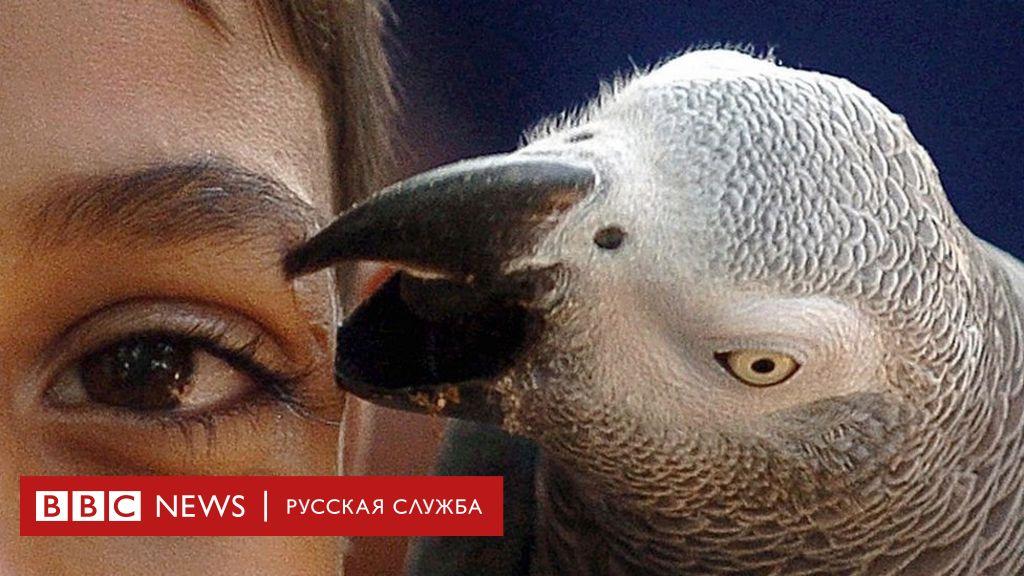 Почему отказ от мяса не спасет планету и чему нас учат попугаи