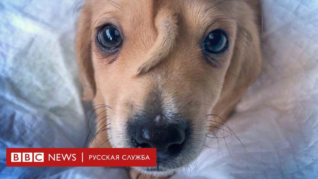коронавирус у щенка