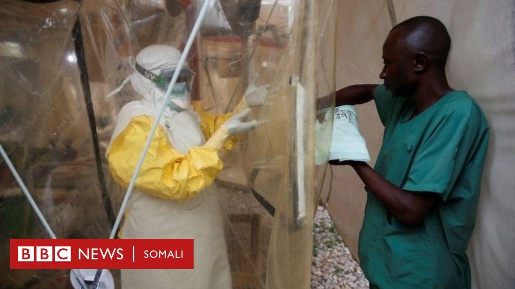 Wiil laga helay cudurka Ebola dalka Uganda - BBC News Somali
