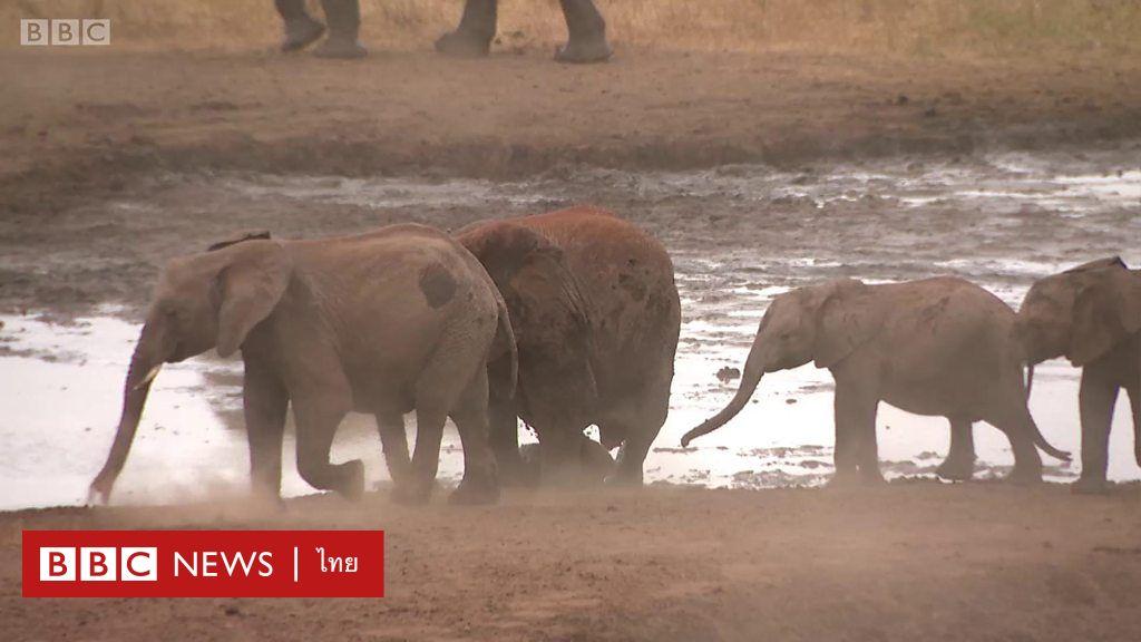 ผลการค้นหารูปภาพสำหรับ นักเรียนเคนยาคิดค้นอุปกรณ์ไล่ช้าง