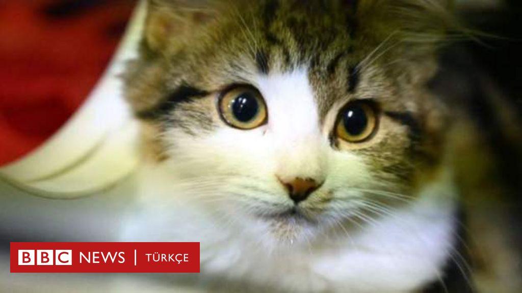 Çin'in Şenzen şehri kedi ve köpek eti satışını yasakladı