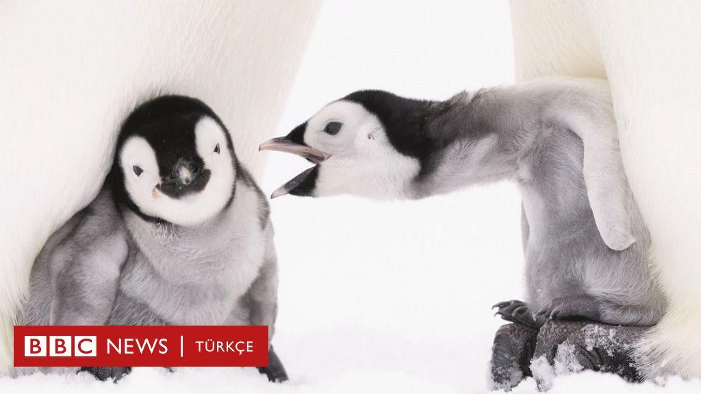 Alman fotoğrafçı 10 bin penguen ile birlikte geçirdiği ayları görüntüledi