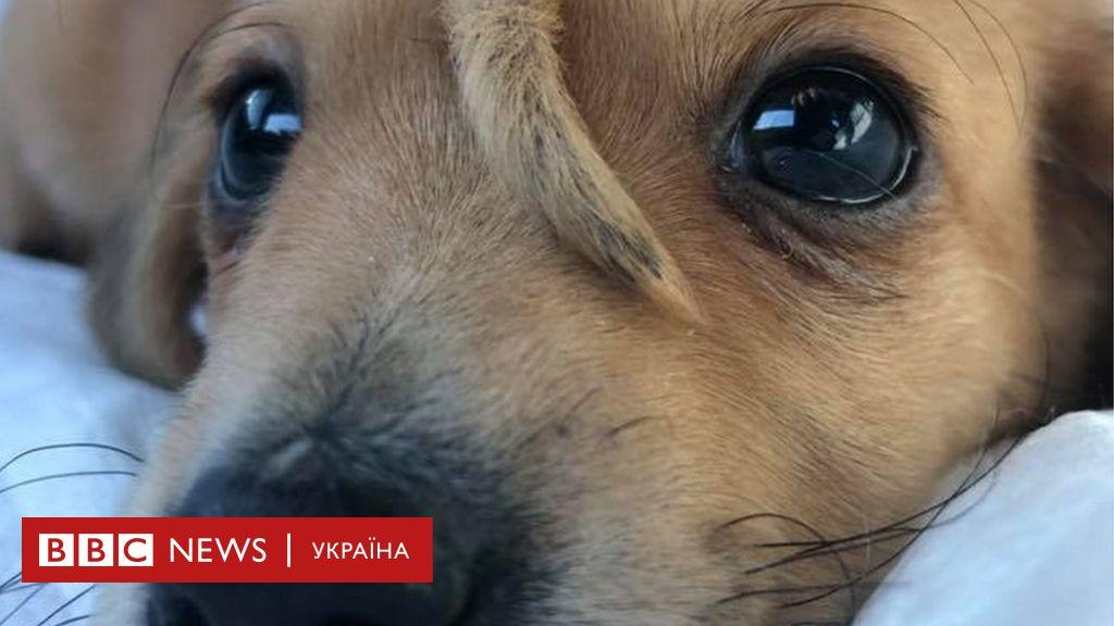 """""""Пухнастий єдиноріг"""": в США знайшли щеня з хвостом на лобі"""