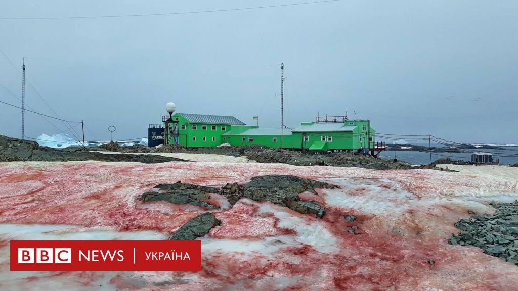 В Антарктиді випав червоний сніг. Українські полярники з'ясували, чому