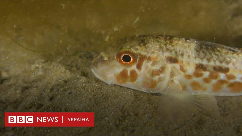 Вбивчий пластик на дні. Коли хвилюється Чорне море – мінісеріал BBC