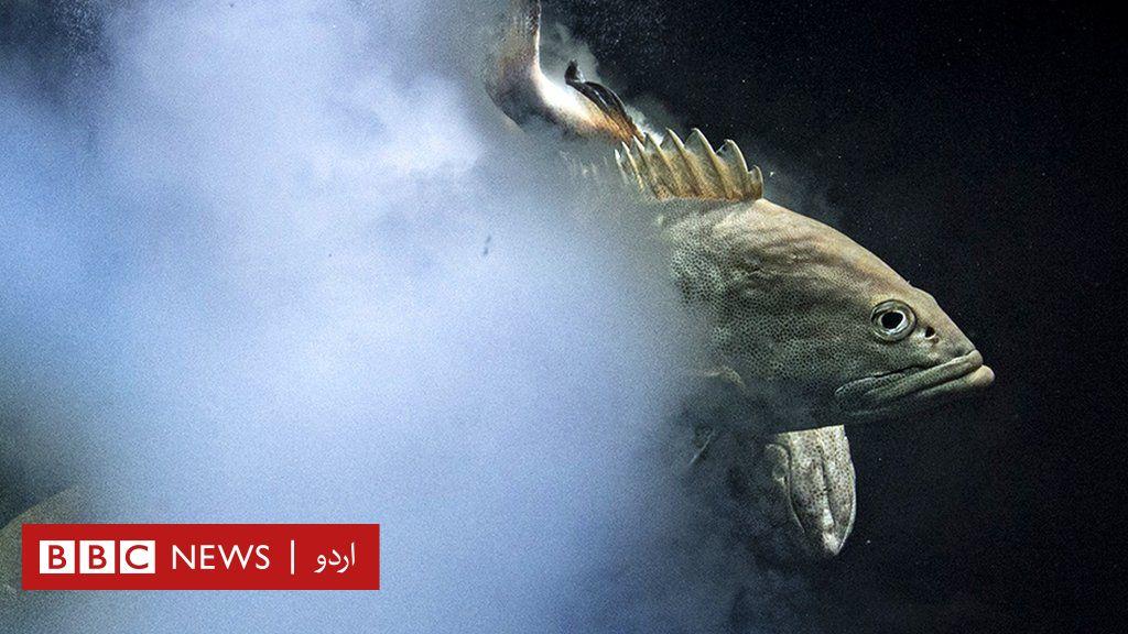 'دھماکہ خیز سیکس' تصویر پر بہترین وائلڈ لائف فوٹوگرافر کا اعزاز thumbnail