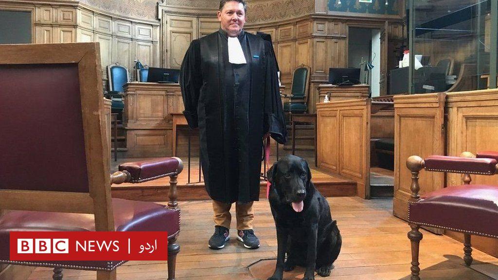 فرانسیسی عدالتوں میں پُرتشدد جرائم کے شکار افراد کو پُرسکون رکھنے کے لیے کتوں کا استعمال thumbnail