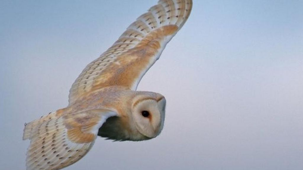 Owl shuts down police communications