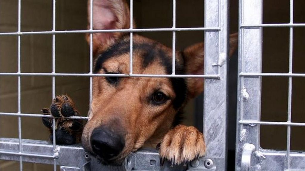 Animal cruelty sentences to rise to five years in prison