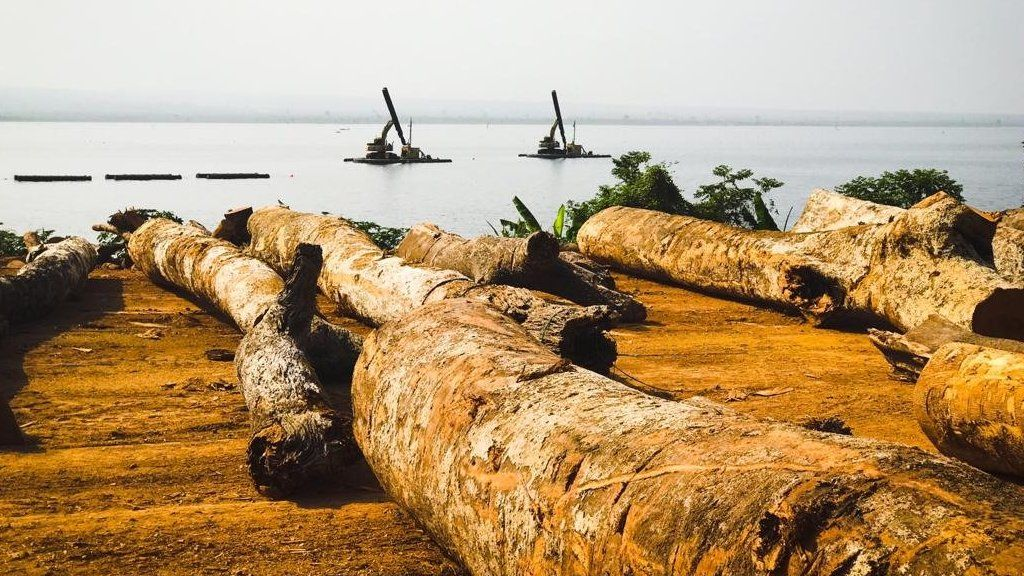Logs of wood that have been salvaged from Lake Volta