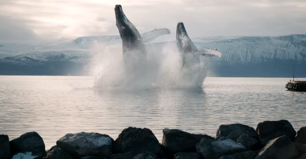 Two CGI whales in the Eurovision film