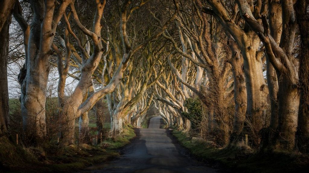 NI paper review: Dark Hedge tree sale and lost - BBC