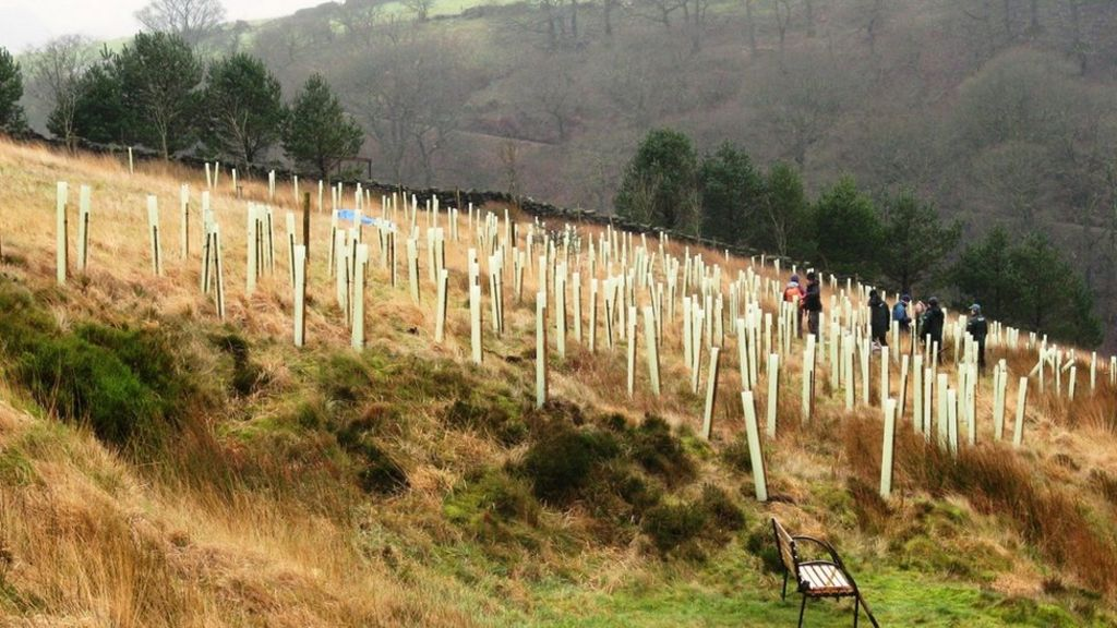 Tree planting 'can reduce flooding' - BBC News