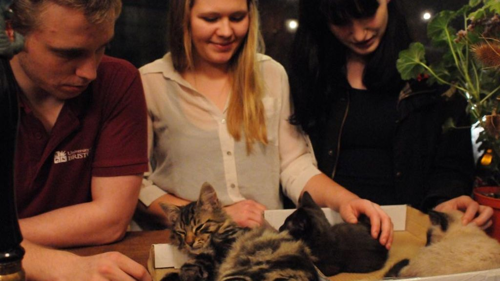 Cats and customers in the Bag of Nails Pub in Bristol
