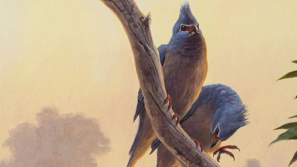 the arguments over the evolution of birds You may also be interested in reading our top 10 list of arguments that can't be won where evolution or the evolution of these birds can evolution over 200.