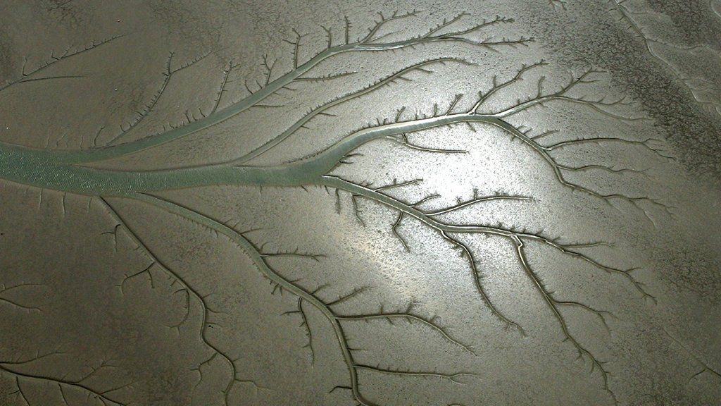 Channels in mudflats look like a tree when photographed from the air
