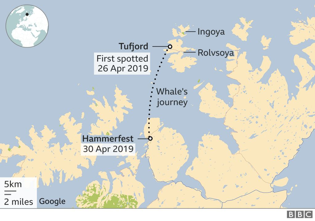 A map showing the whale's journey in Norway