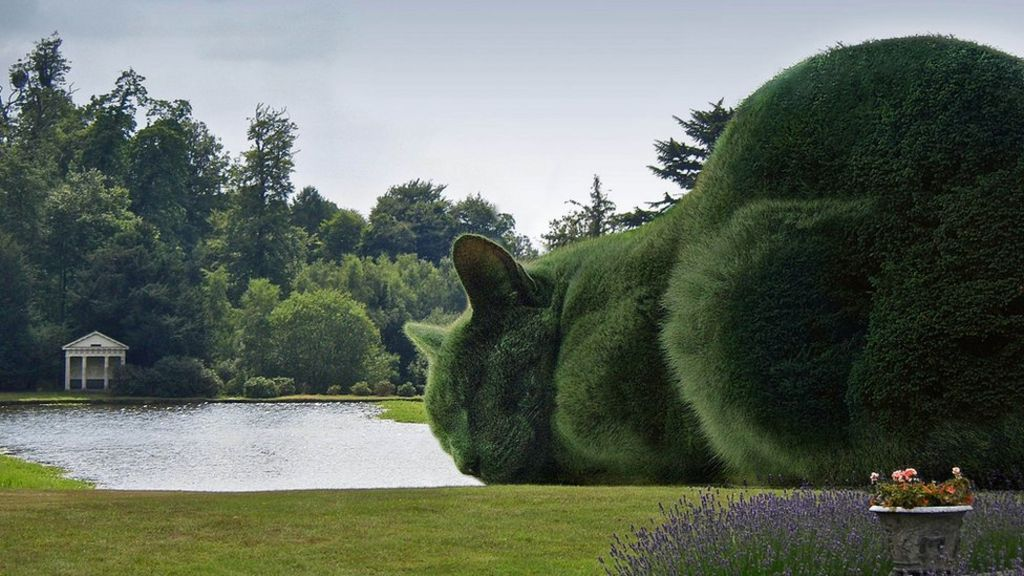 Topiary Cats Seen By Millions On Facebook Bbc News