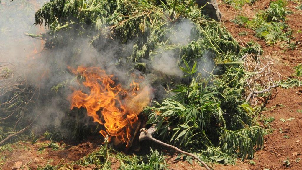 Сжигании конопли видео марихуана у сотрудника полиции изъята