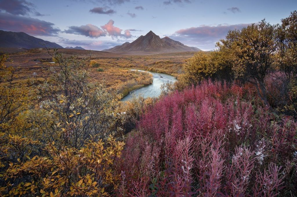 A landscape showing a river with yellow and red plants with a mountain in the background