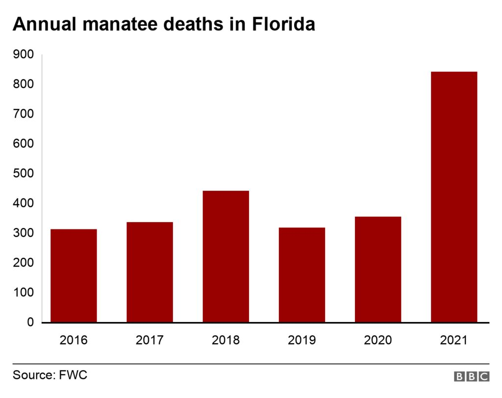 A chat showing the annual number of manatee deaths in Florida since 2016