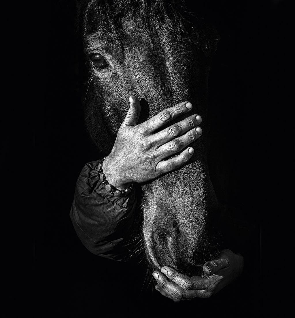 Hands of horse trainer Connie Colfox