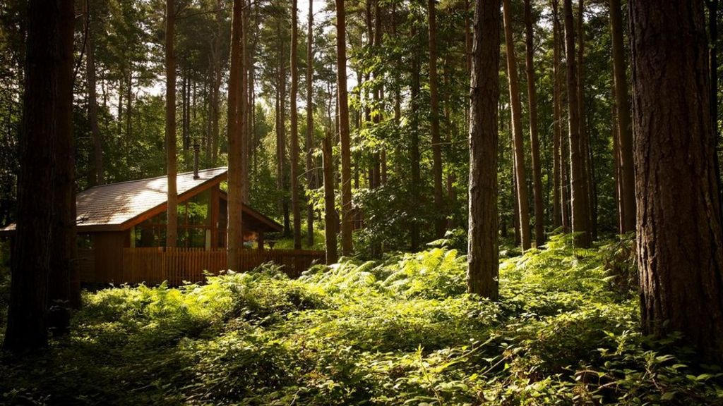 lik logcabin food forest - 1024×576