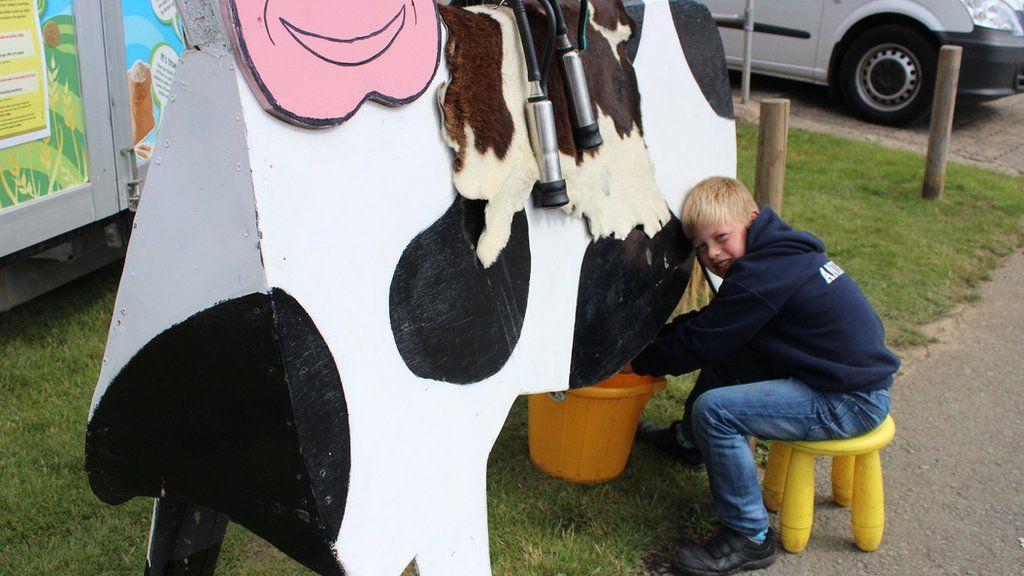 Ben yn darganfod sut ansawdd sydd i laeth y fuwch hon // Ben is getting a taste for milking