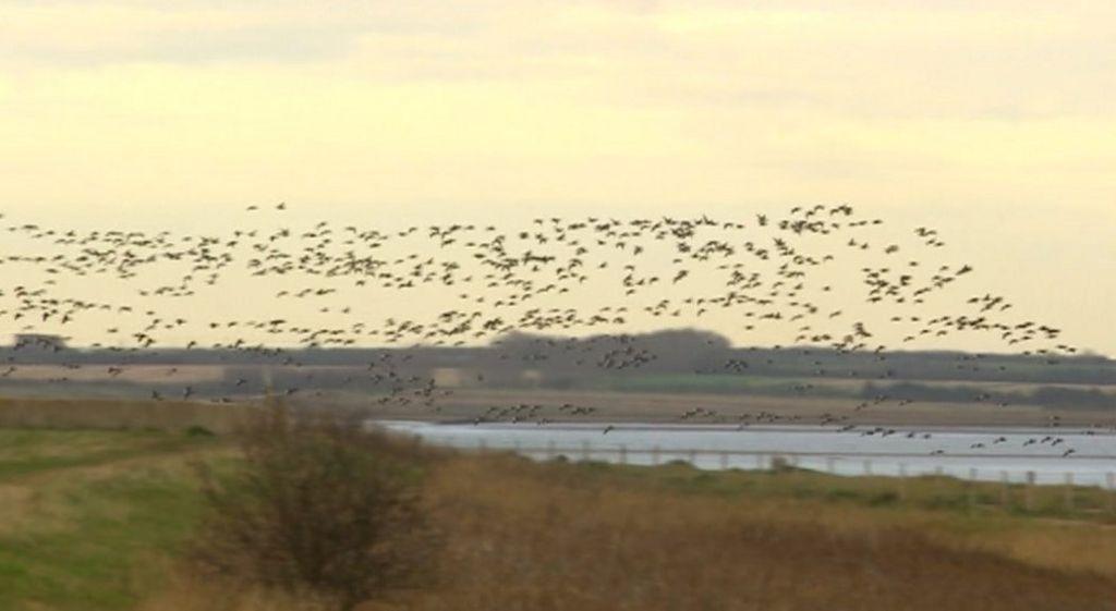 Birds flying over Graveney