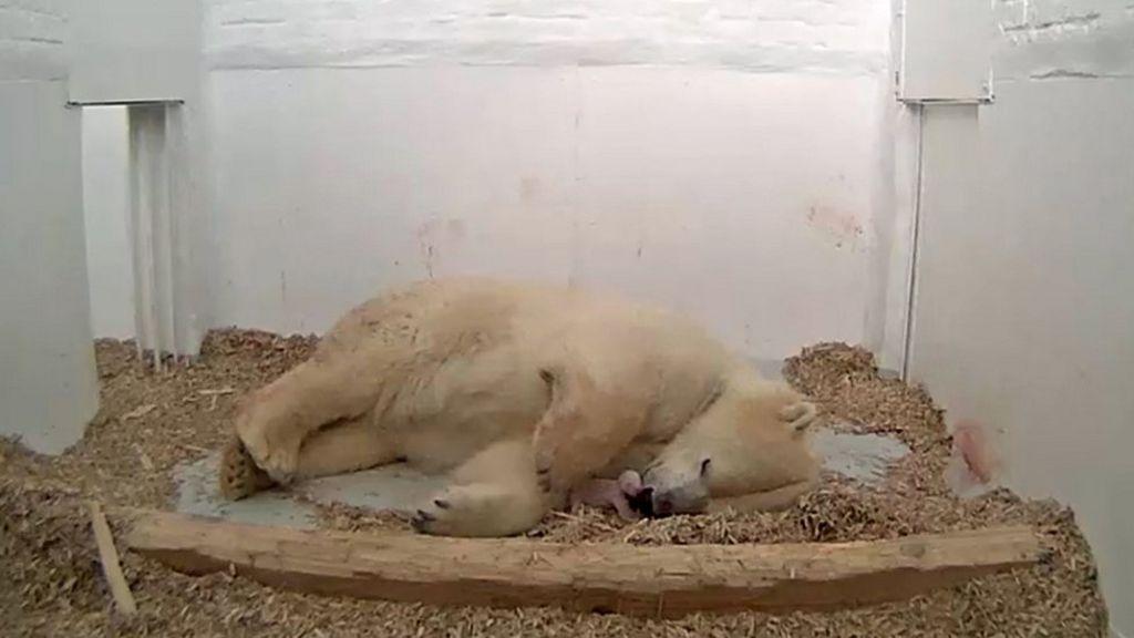 Polar bear cub in Berlin Tierpark zoo dies after 26 days