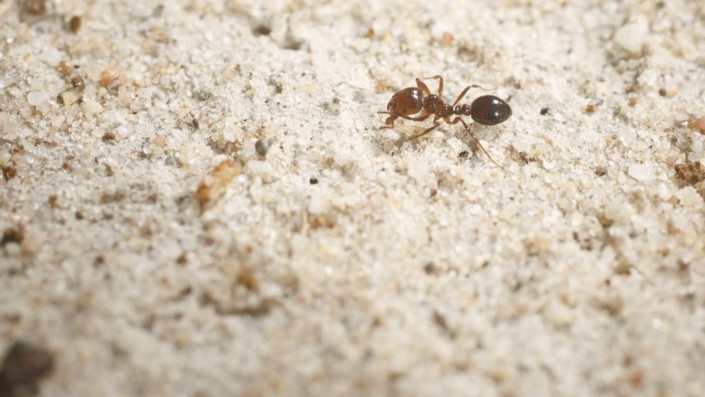 fire ants essay The fire ant essays:  home » essay » the fire ant 1  the effected items where fire ants have been known to nest and be found include:.