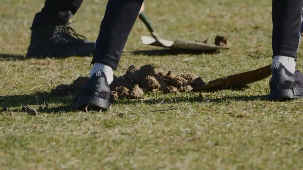 Shovelling animal dung from the pitch