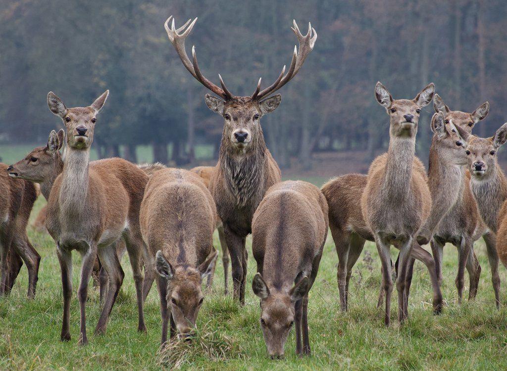 November 2020 - Red Deer Stags