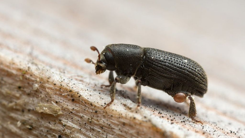 Climate Change and Mountain Pine Beetle Outbreak