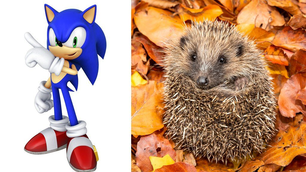 Pikachu To Sonic Meet The Video Game Characters Inspired By Animals Cbbc Newsround