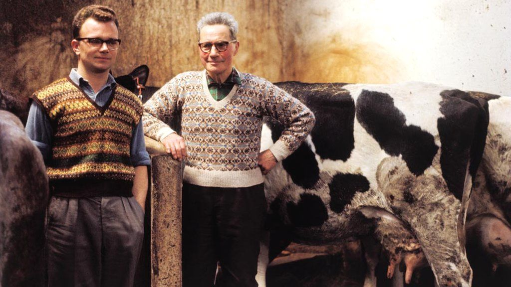 Two men posed wearing Fair Isle style tank top and jumper with cattle in a barn on one of the Shetland Islands in 1970.