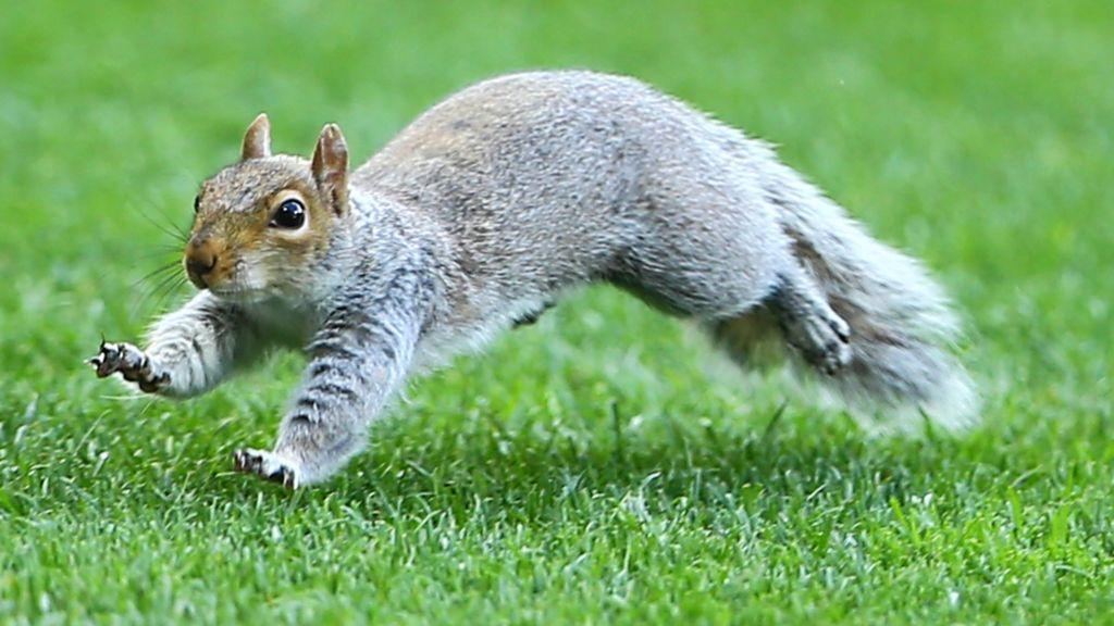 Benin aim to ditch Squirrels nickname - BBC Sport