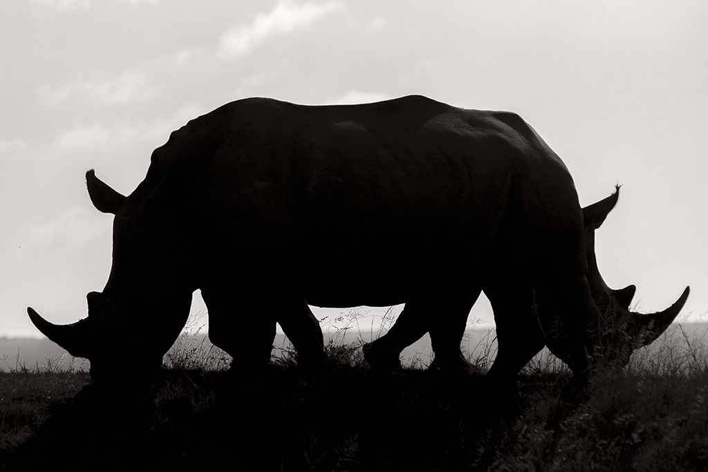 Confusion by Rudi Hulshof, South Africa