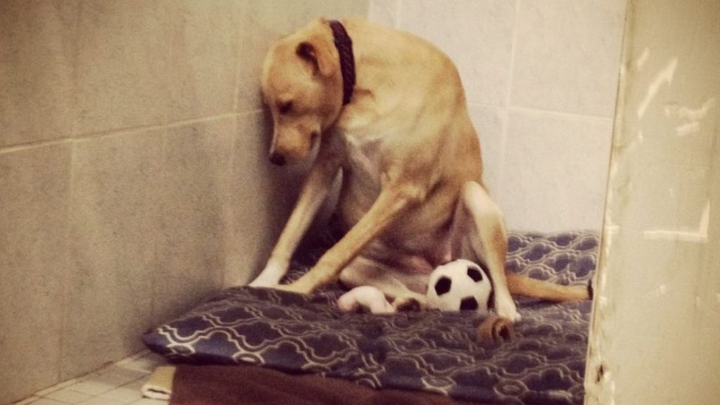 Lana, the world's 'saddest dog', needs another home