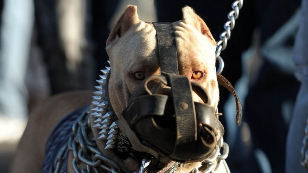 Dog Fighting Campaigners Call For Action Against Owners