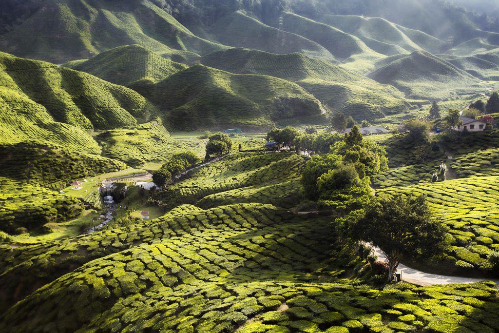 Tea Farm Sunset by Theam Meng Sea