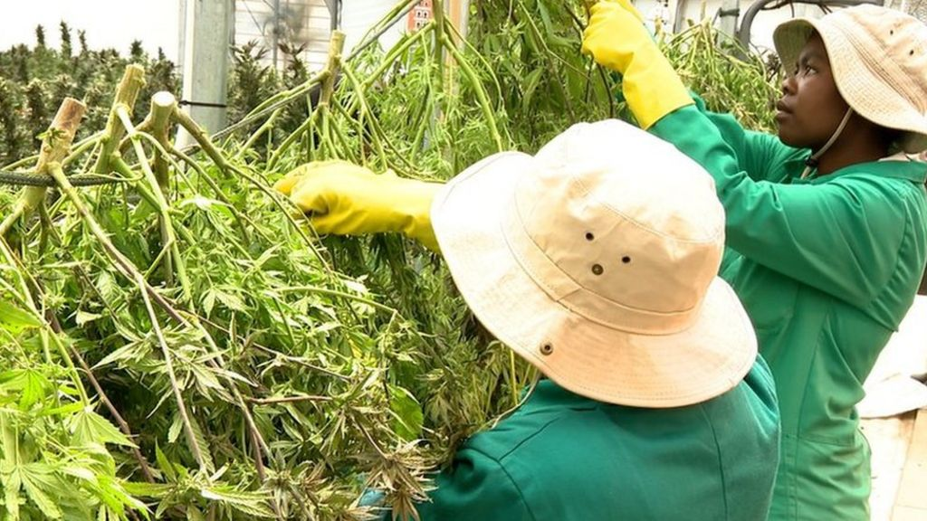 Weed Industry News