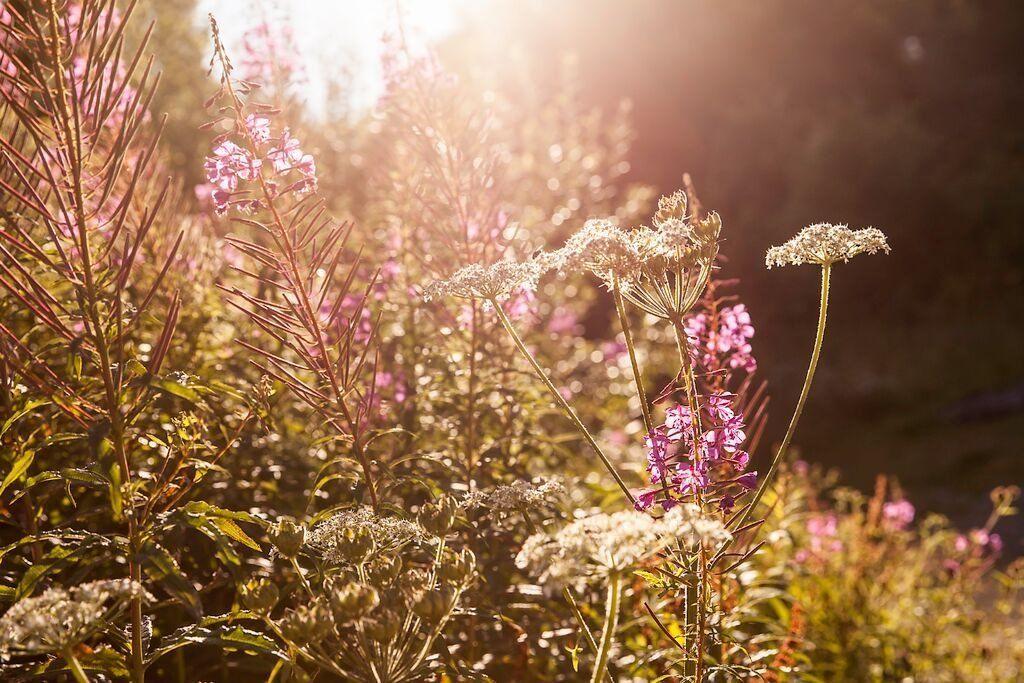 Mae'r gwrychoedd yn edrych yn dlws yr adeg hon o'r flwyddyn // The hedges look pretty at this time of year