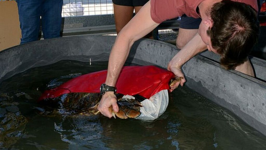 Turtles given poo-collecting swimsuits