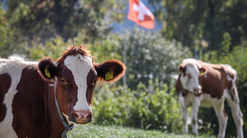 bbc.co.uk - Switzerland considers tighter rules on sustainable 'fair food