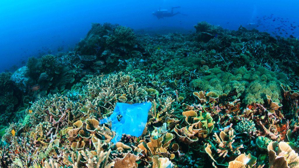 UN commits to stop ocean plastic waste - BBC News 12510c6d2cebe